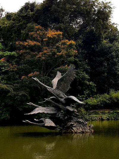 Statue in Duck Pond Tree Nature Growth No People Water Outdoors Day Beauty In Nature Sky Singapore Lake Statue Botanic Gardens First Eyeem Photo
