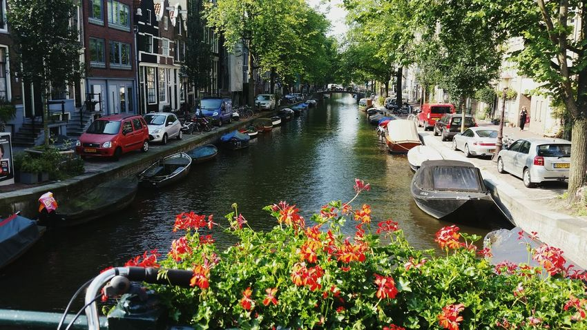 Canal Flowers Sun Europe Amsterdam Holland Netherlands Jordaan Adapted To The City