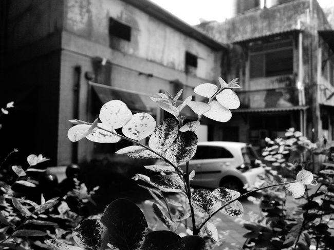 Showcase March FirstOfAKind Loneflower Nature Everyday Lives Littlethingsinlife ABeautifulWorld Springcollection Blackandwhite Spring Plant