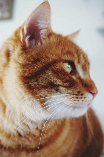Day dreaming.. Cat Catselfie Animals Dreaming Enjoying Life Eyemphotography