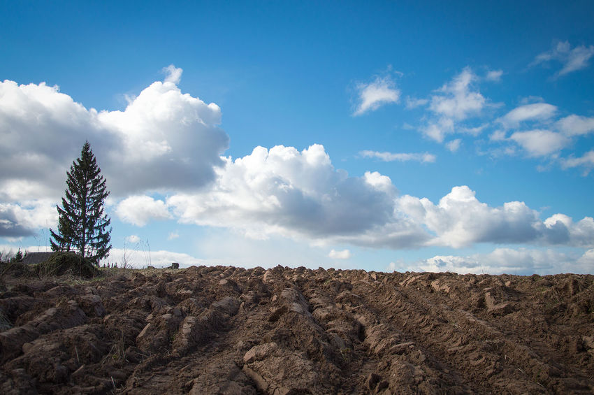 Arable Land Beauty In Nature Cactus Cloud - Sky Day Field Growth Landscape Nature No People Outdoors Plant Plowed Field Scenics Sky Tranquil Scene Tranquility Tree Break The Mold Art Is Everywhere EyeEmNewHere Akniste Latvia The Great Outdoors - 2017 EyeEm Awards Place Of Heart