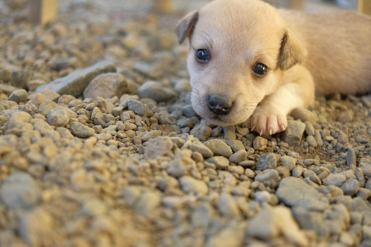 Cutedogs Cute Puppy Philippines Nueva Ecija Puppy Aspin Askal Dog Pet Portraits