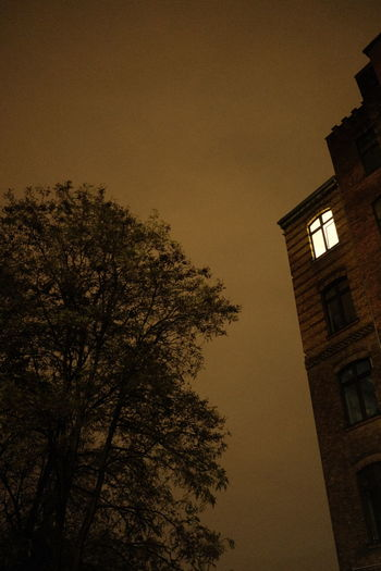 Low angle view of silhouette tree against building at night