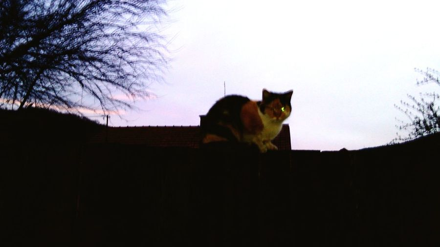 Cats 🐱 Enjoying LifCAcat caMy Cat Cat Watchincari eye em nature llloverccatcCat♡cat
