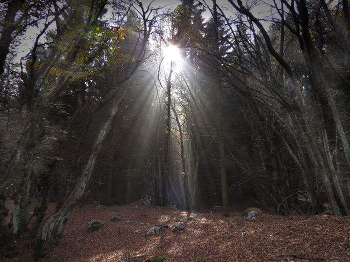 Beauty In Nature Beech Forest Forest Landscape Landscape_photography Light Leaking Nature No People Outdoors Scenics Sunbeams Through Tree Sunlight Tranquil Scene Tranquility