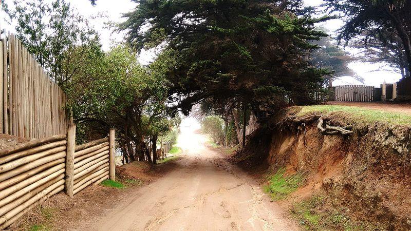 Isla Negra Mar Naturaleza Motog2 No Destruccion A La Vida Planeta Chile