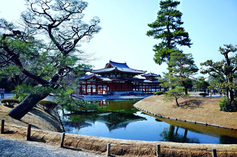 Byodoin Temple Japan Temple Kyoto Byodoin Temple Tree Water Architecture Built Structure Plant Sky Nature Building Exterior Day No People Building Lake Reflection Outdoors Garden Travel Destinations Park - Man Made Space