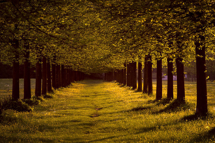 Spring Lights Sunlight Beauty In Nature Day Direction Grass In A Row Land Light And Shadow Nature No People Outdoor Photography Outdoors Outdoors Photograpghy  Plant Scenics - Nature Spring Springtime Sunlight The Way Forward Tranquil Scene Tranquility Tree Tree Trunk Treelined