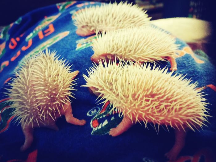 Cute Pets Unexpected Delivery Awesome Hedgehogs EyeEm Pets