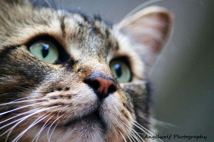 Cat EyeEm Pets Feline Eye4photography  Petstagram EyeEm Best Shots
