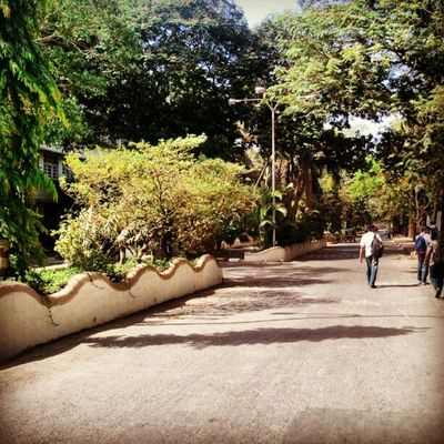 my most Beloved place... my College Campus .. Kjsce nature collegelife nostalgia