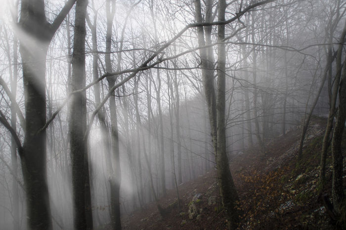 Blackandwhite Alpi Apuane First Eyeem Photo Fog Foggy Day Forest From My Point Of View From Where I Stand Haze Italia Italy Mountains No Leafs Photo Photography Landscapes With WhiteWall Sunbeam Sunbeams Toscana Tree Trees Tuscany Winter Wood WoodLand