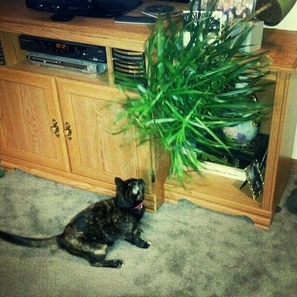 Dear #cat, why you gotta be a dick?