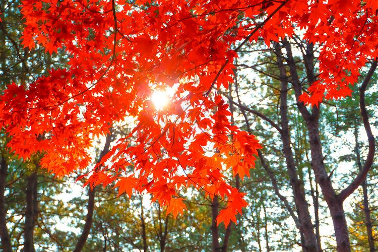 Autumn Autumnal