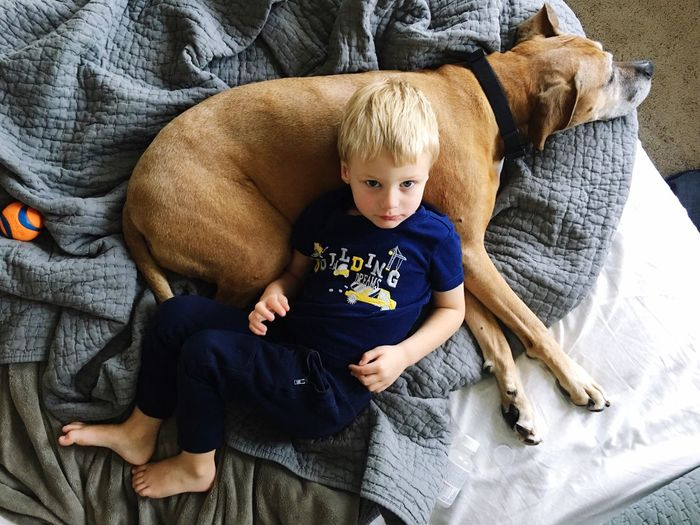 Boy Dog Cuddlers Childhood Showcase: February Best Friends Mansbestfriend Scotts Valley California United States Blonde Boy Rescue Rescue Dog Bed Quilt Bedding Resting Relax Two Is Better Than One