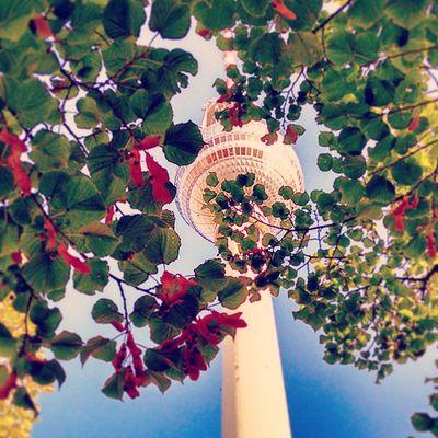 Fernsehturm Berlin Deutschland Germany Ig_deutschland Ig_germany Ig_europe Insta_international Insta_europe Fernsehturm Tv Tower Leafs