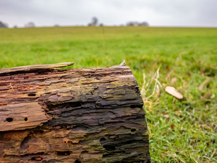 Close-up of wood on field against sky