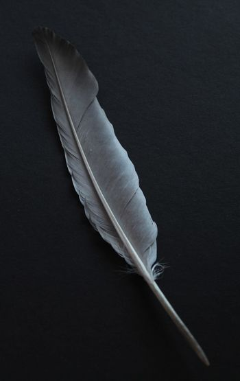 High angle view of feather against black background