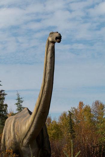 dinosaur in