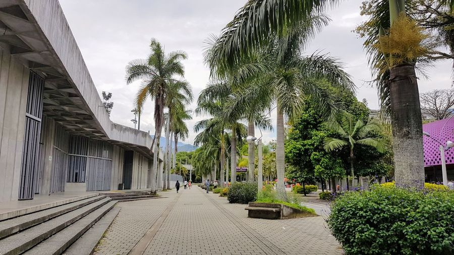 Panoramic shot of palm trees by building against sky