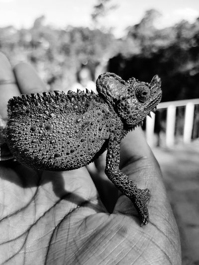 Friends of the Earth Close-up Lifestyles Reptile Human Hand Focus On Foreground Nature Blackandwhite Tree Day Outdoors Black & White Travel Photography Black And White Photography Blackandwhite Photography Animals In The Wild Animal Themes