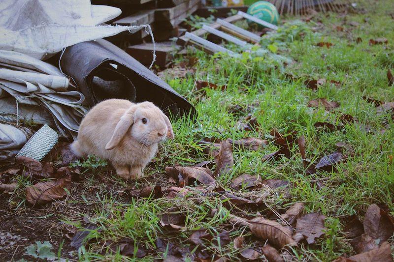 Bunny  Animal