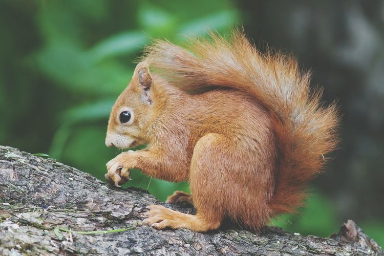 One Animal Animals In The Wild Animal Wildlife Animal Themes Nature Animal No People Outdoors Mammal Close-up Day Squirrel Creature