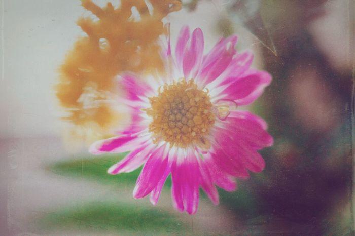 Meditation Arizona Flowers Mextures Holgalens Digitalphotography Sony A6000