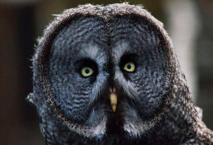 Owl Wildlife Wildlife & Nature Farm Beutiful  Perfect