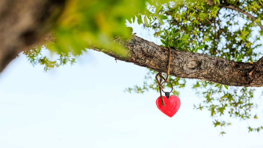 Low angle view of red heart shape hanging on tree trunk