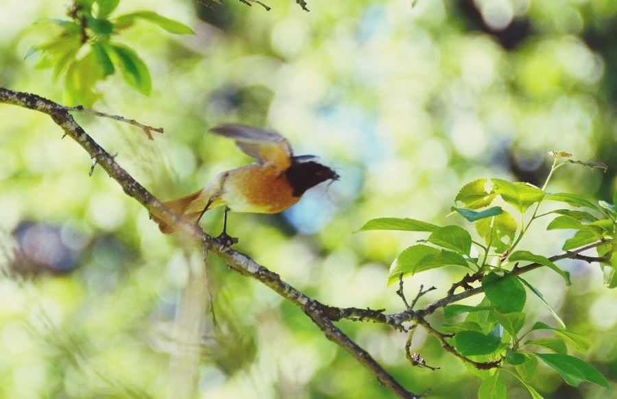 Branch Animal Wildlife Animals In The Wild One Animal Tree Nature Bird Beauty In Nature Animal Themes Animal No People