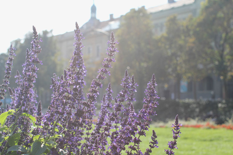 Background Backgrounds Blooming Croatia Destination Detail Flower Flower Head Flowers In Park Growth In Park Old City Building Park Plant Plant Plants Plants And Flowers Tourism Travel Destinations Weekend Zagreb Zagreb City Zagreb, Croatia Zrinjevac