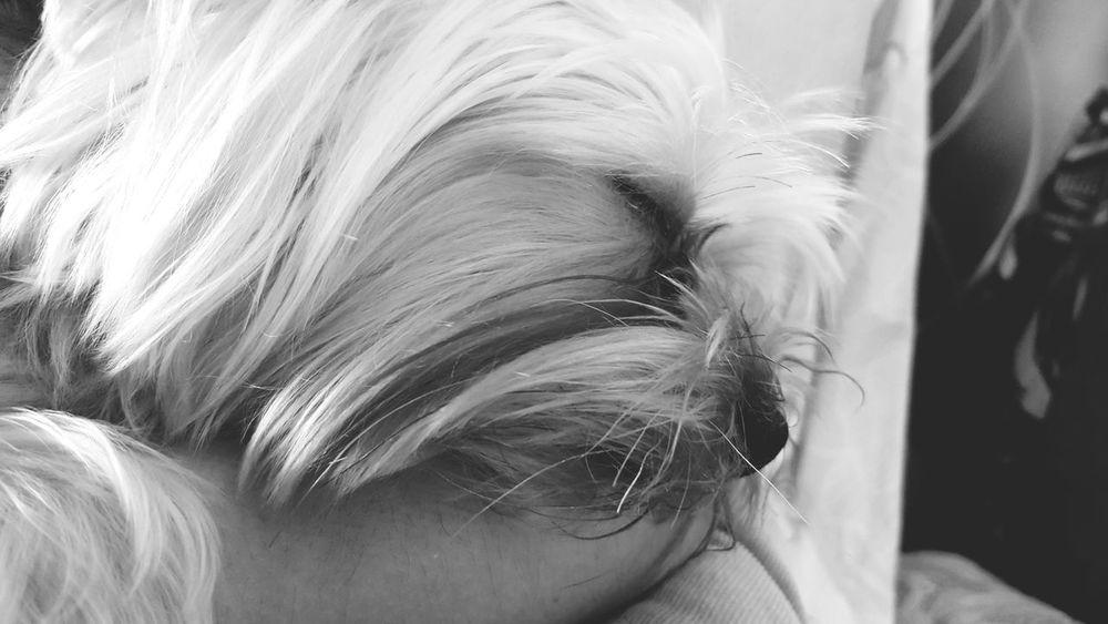 Ocha Sleeping Dreaming My Arm Lovely Black And White