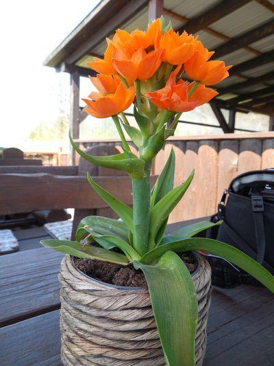Flower Flower Pot