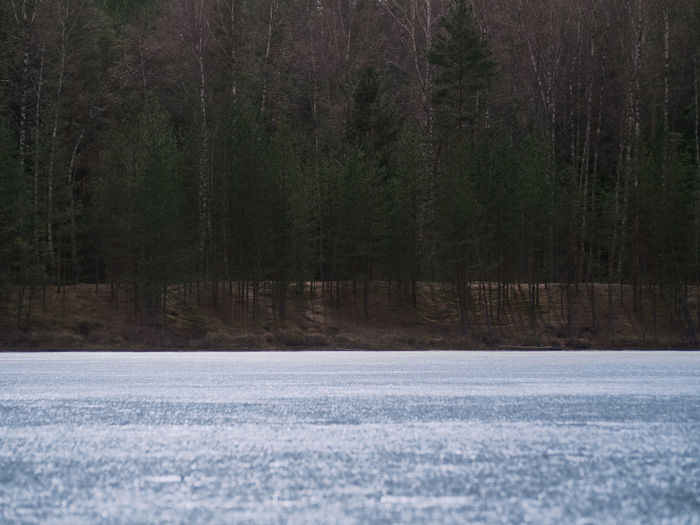 Scenic view of frozen lake in forest