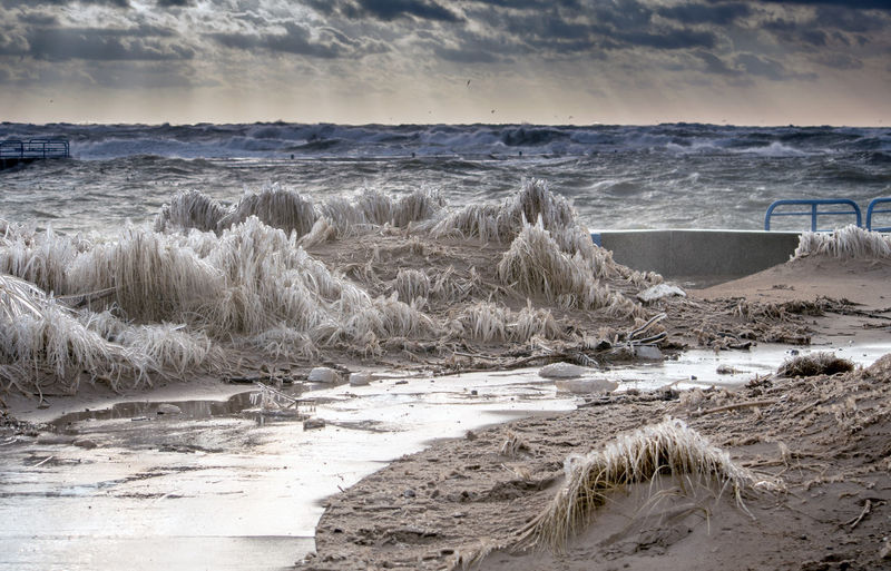 Beach grass is encased in ice along the shores of lake michigan, on a february day in north america