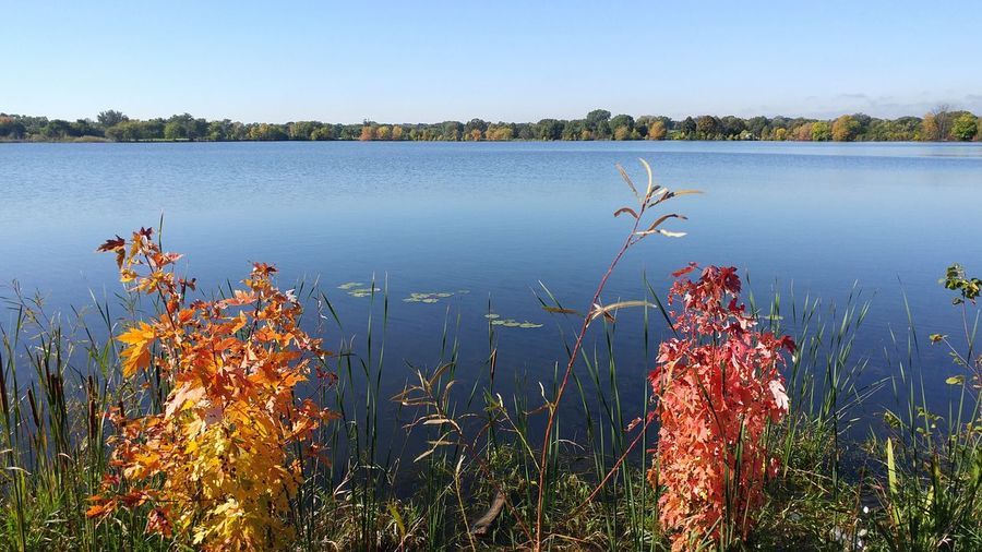 Fall Beauty Fall Is Here Fall 2016 Water Tranquil Scene Lake Beauty In Nature Nature Blue Outdoors No People Minneapolis Urban Nature Urban Park Lake Hiawatha Changing Seasons Changing Leaves Colorful Nature