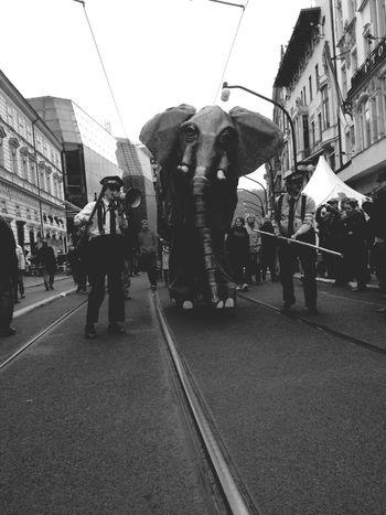 Street Street Photography Animals Czech Republic Prague 17.11.