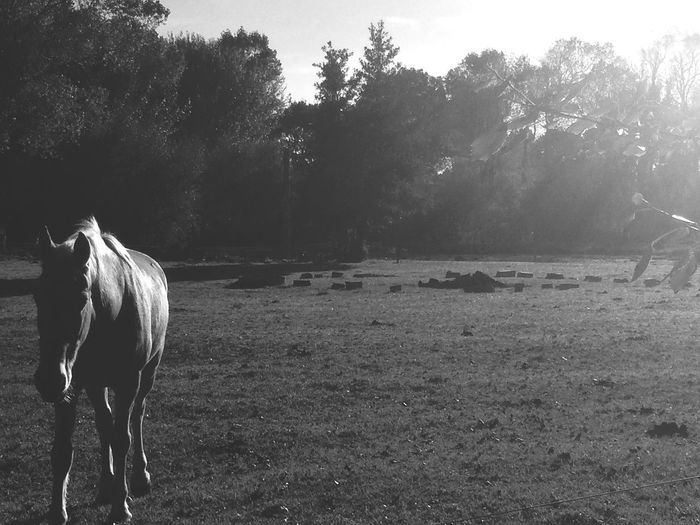 Coming to say hello Horse Autumnmorning Sun Field No People Blackandwhite