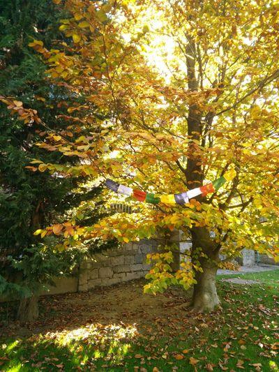 Autumn Nofilter Bandiere Tibet Bandieretibetane Religion Colors Nature Albosaggia