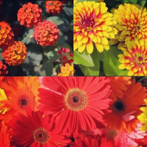 • Flowers • Fiori Primavera Estate Sole Colori Giallo Arancione Losclero Eiocomeunaminchionastudiare Fioribelli
