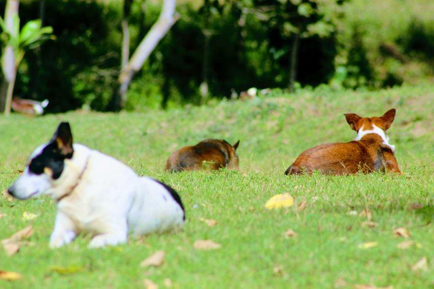 Animal Wildlife Nature Animals In The Wild Fresh On Eyeem