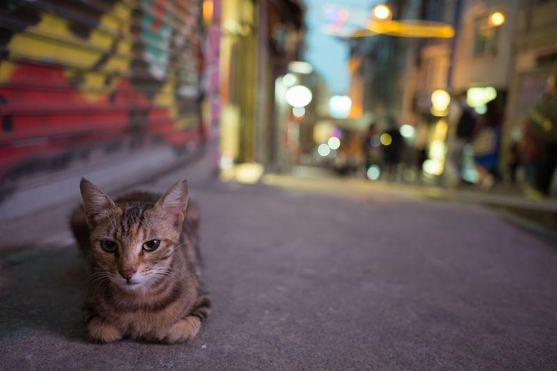 Portrait Of Cat On Road