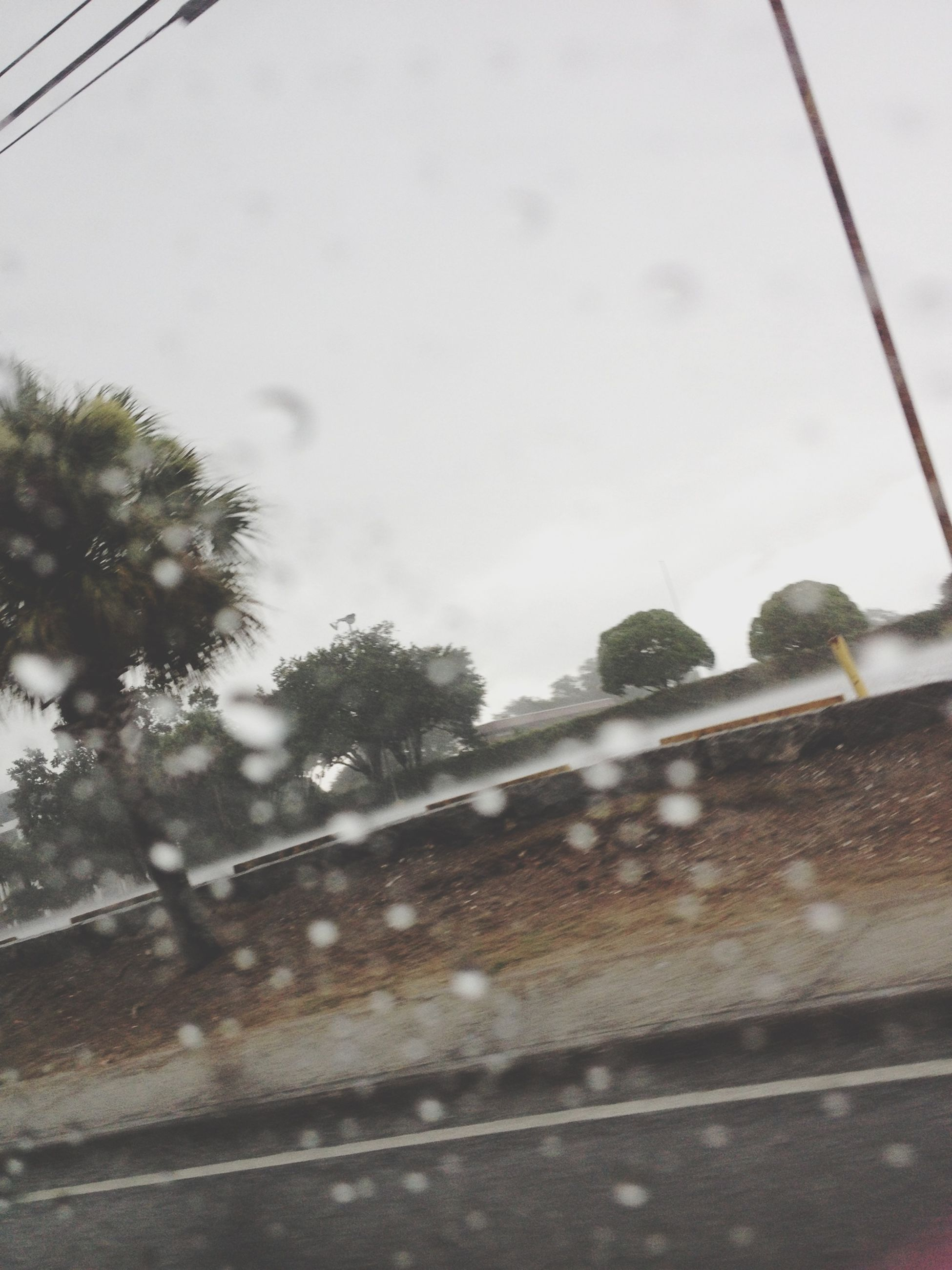 transportation, sky, tree, wet, land vehicle, mode of transport, low angle view, rain, weather, close-up, road, day, car, street, power line, glass - material, no people, vehicle interior, drop, window