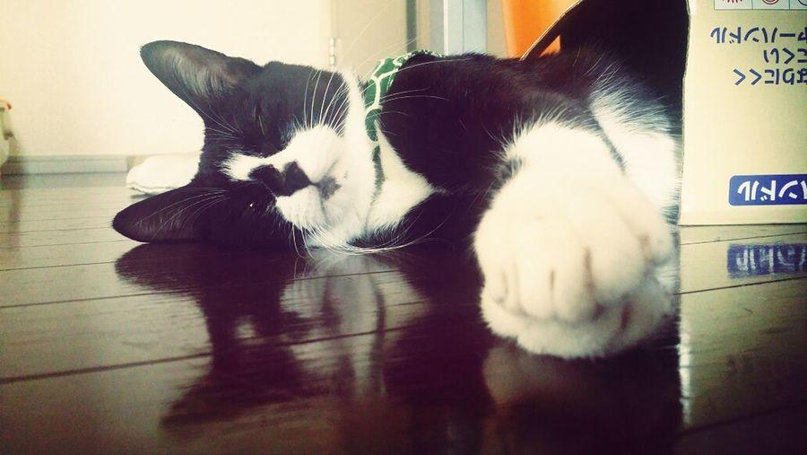 Cat Cat Lovers おはぎさん うちの猫