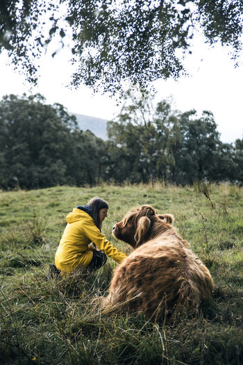 Moody Sky Moody Mood Hairy Cow Hairstyle Hairy  HairyCow Portrait Animal Cattle Cattlefarm Yellow Yellow Color Yellow Coat💛