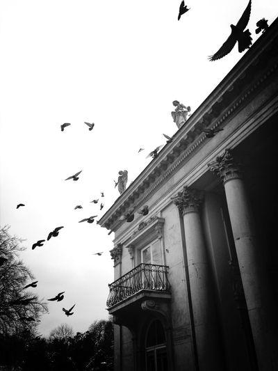 Blackandwhite Birds