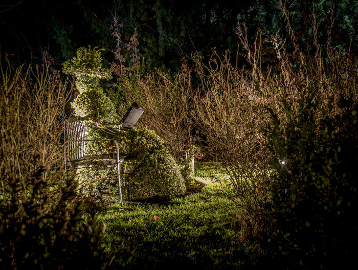 Topiary amidst plants at night