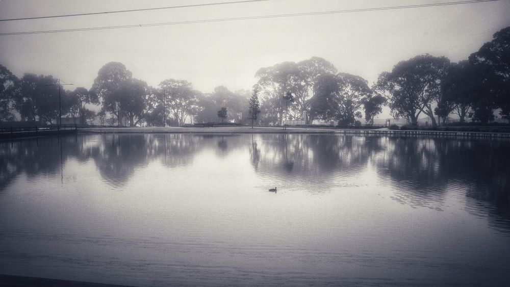 Soft reflections in black and white Water Reflection Lake Tree Plant Tranquility Sky Scenics - Nature Nature Beauty In Nature Tranquil Scene Waterfront No People Idyllic Outdoors Silhouette Bird Animals In The Wild