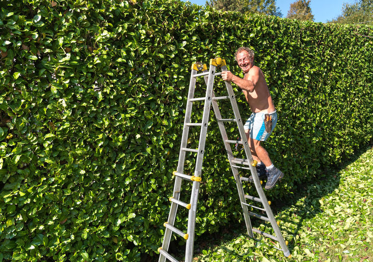 Side view of shirtless mature man standing on ladder by hedge